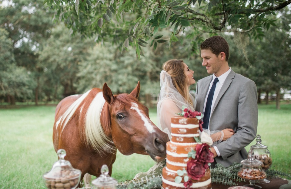 wedding horse sneaking a slice of cake