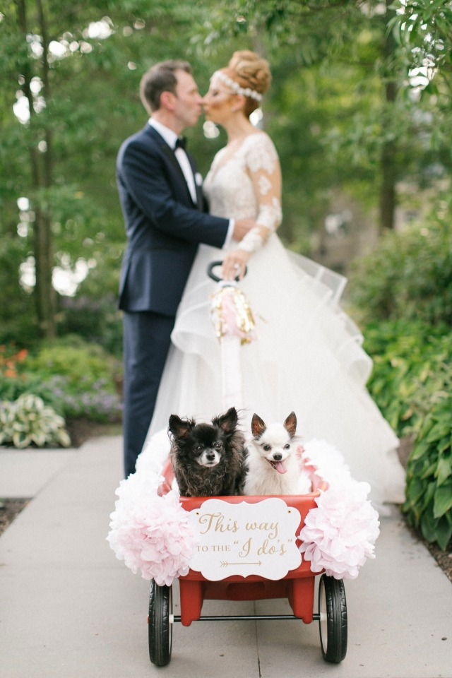 Wedding pups in wagon