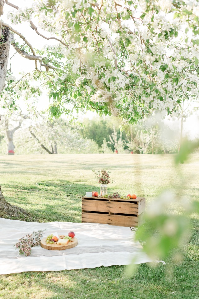 Simple and easy outdoor picnic for your surprise engagement
