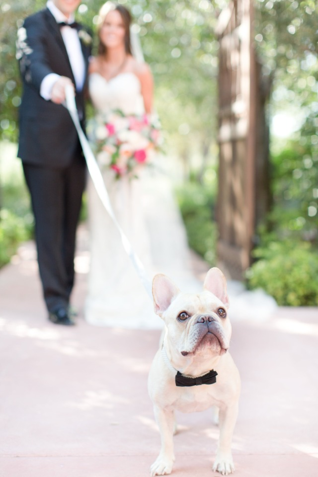 Cute wedding dog with bowtie