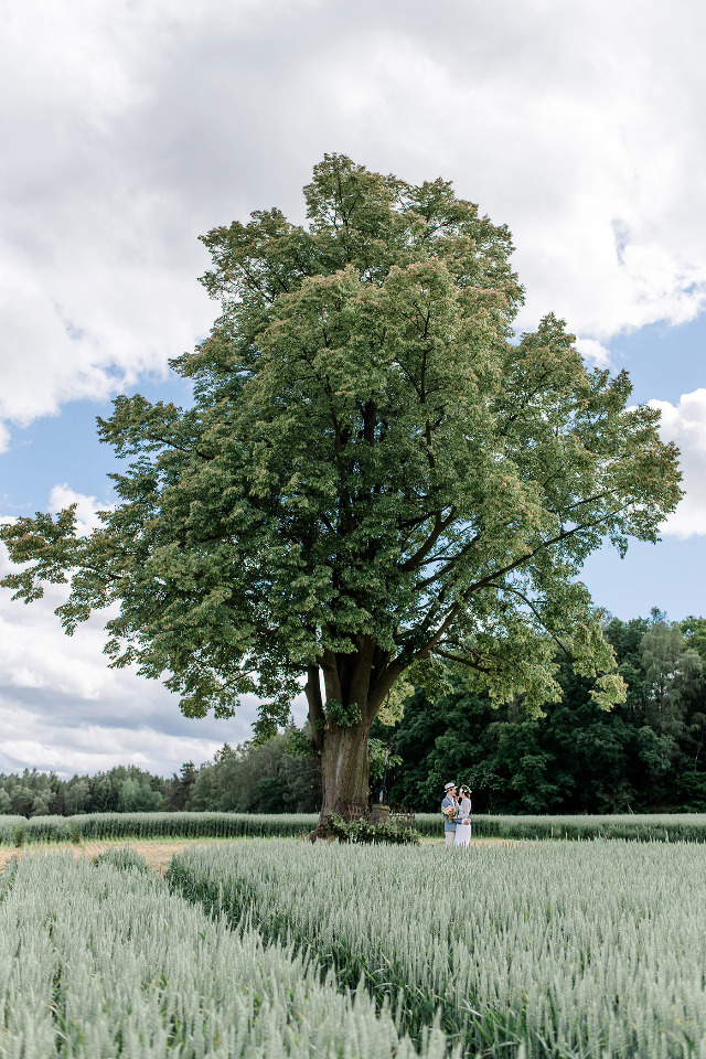 wedding ceremony in a field with a tree