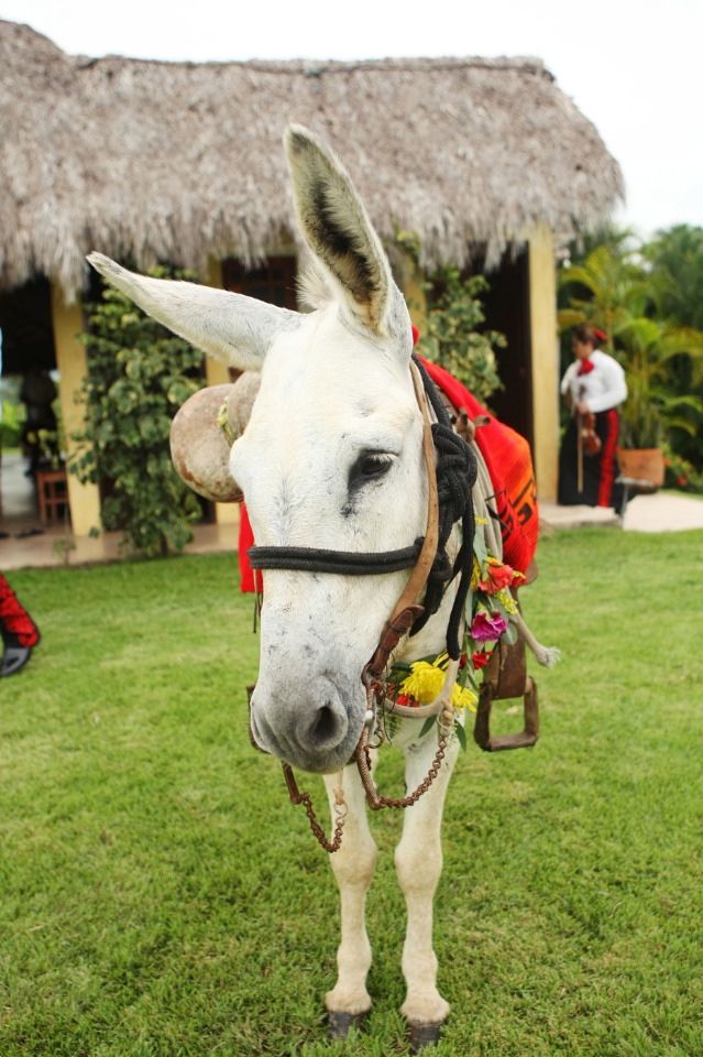 tequila donkey for your wedding
