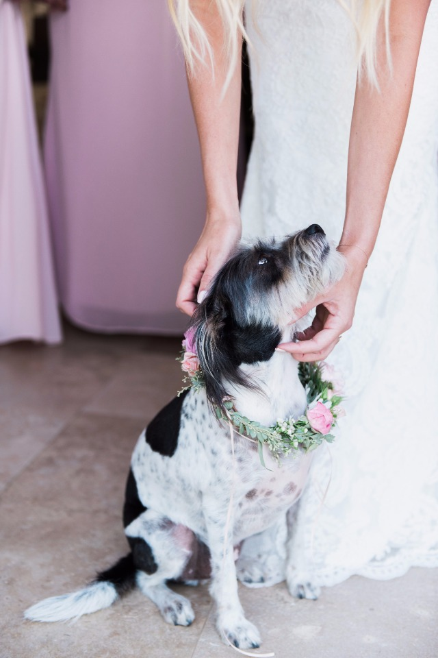 wedding fur baby