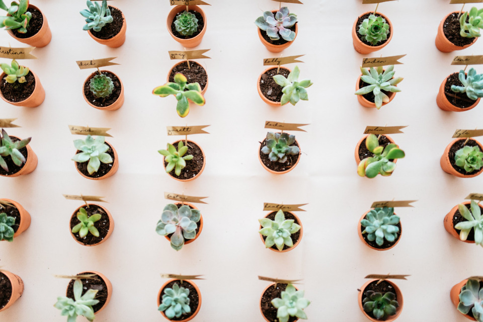 succulent escort cards and favors