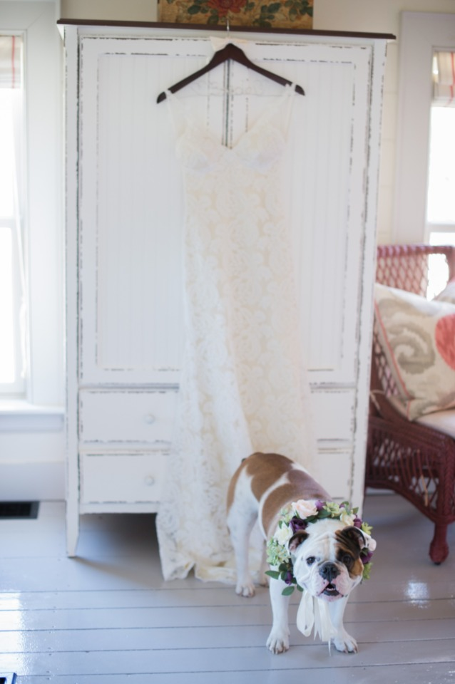 wedding dress and wedding dog