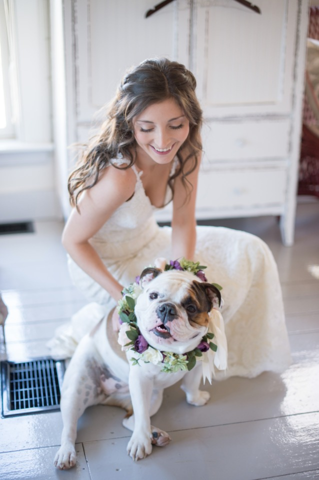 wedding bull dog
