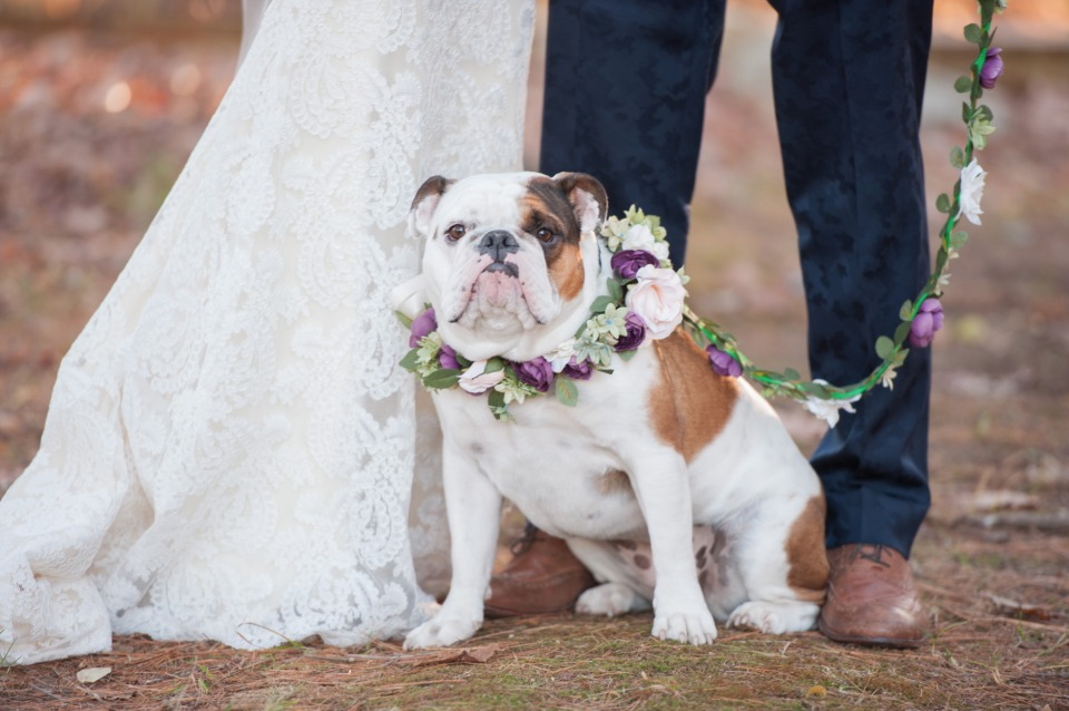 cute flower collar for your wedding dog