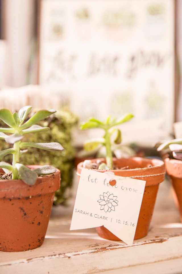 Potted succulent favor