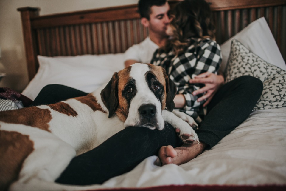 sharing your day with your fur babies