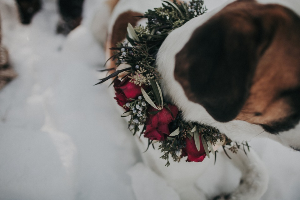 flower collar for you wedding pup