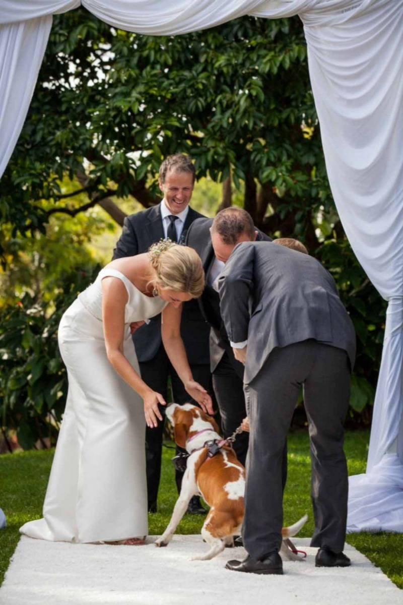 When the couples dog surprised the bride as presented the rings! A magical moment with Brisbane Wedding Decorators https://www.brisbaneweddingdecorators