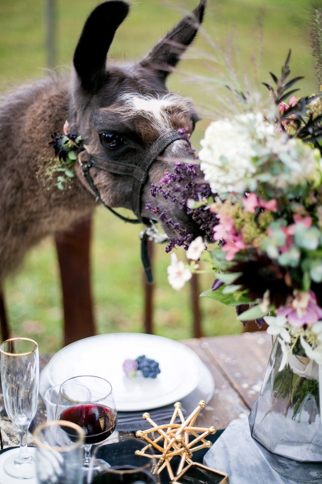 llama in love with this table decor
