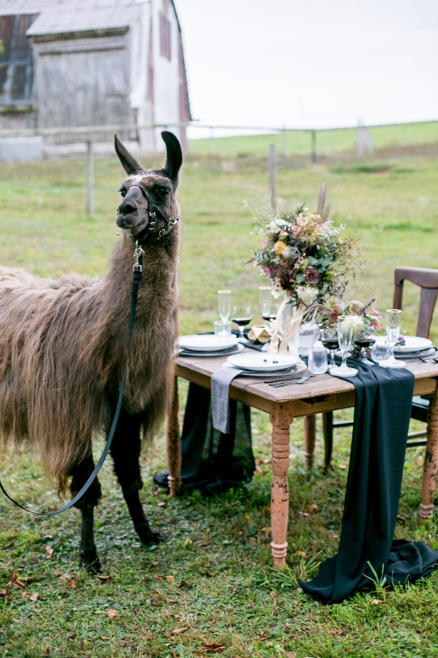 unique guests for your farm chic wedding