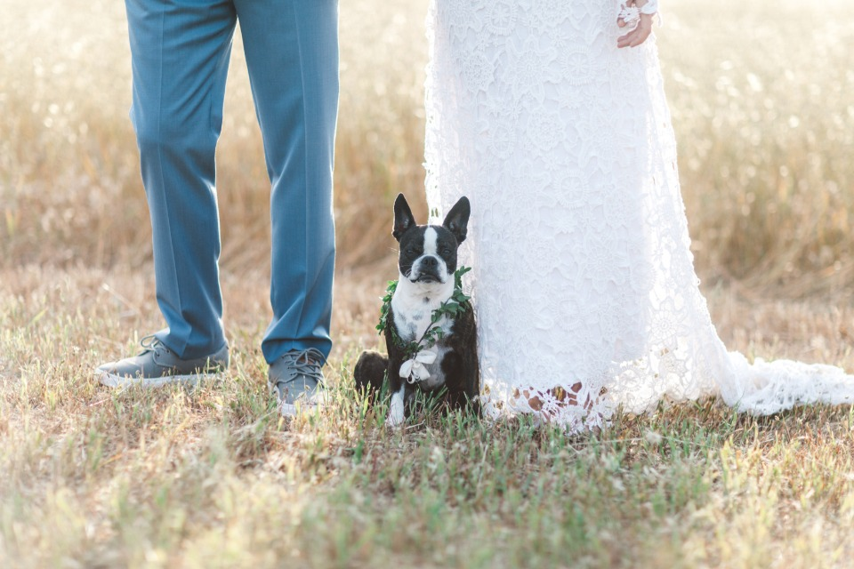 adorable wedding dog