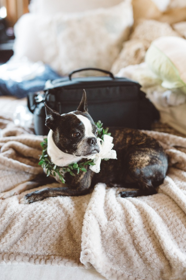cute little flower dog