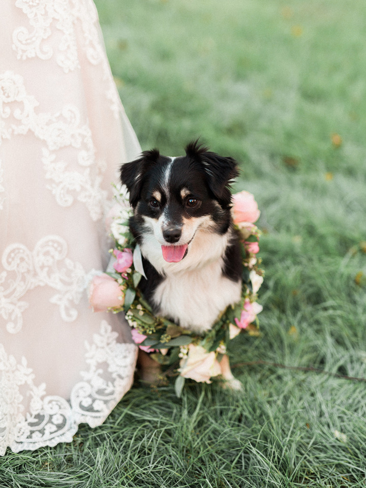 adorable dog with flower collar for your wedding