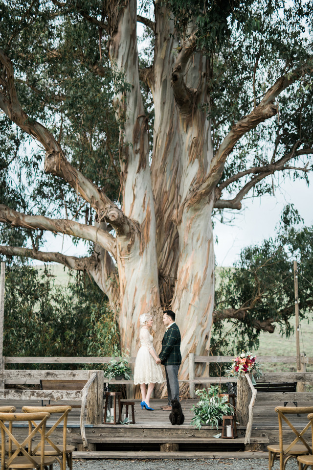 giant tree wedding ceremony venue