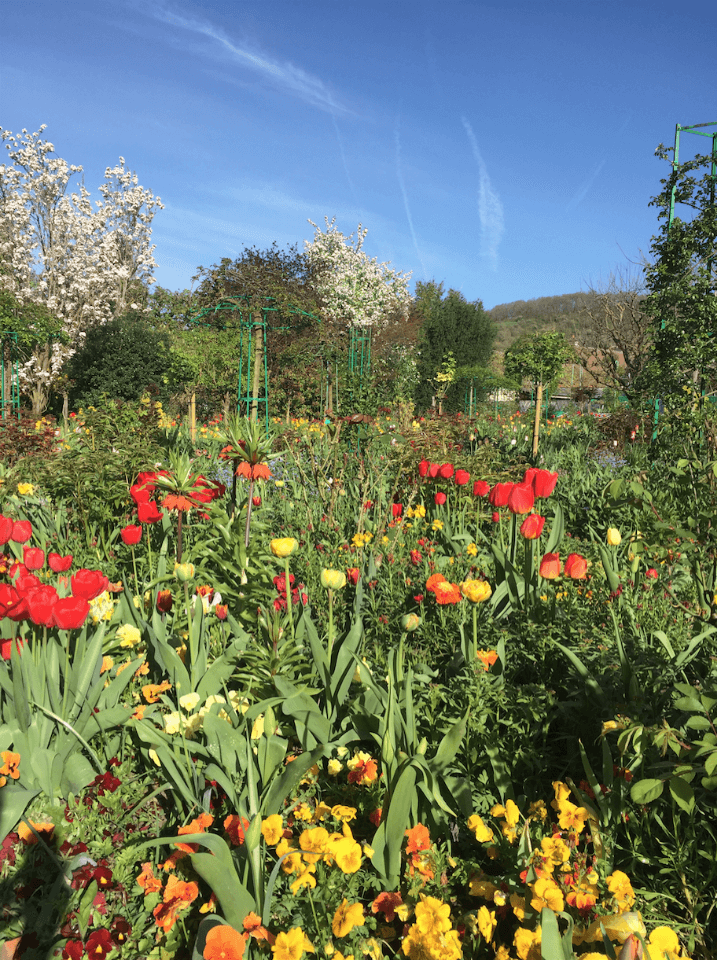 beautiful flowers in Giverny France