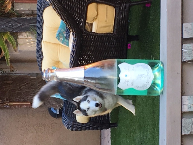 You know the Blanc de Bleu must look good when the Alaskan Husky comes running for it!
