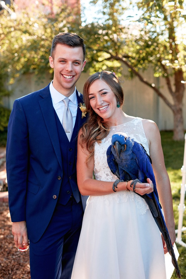 blue wedding parrot