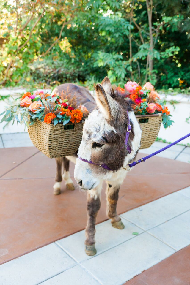 flower burro for your wedding