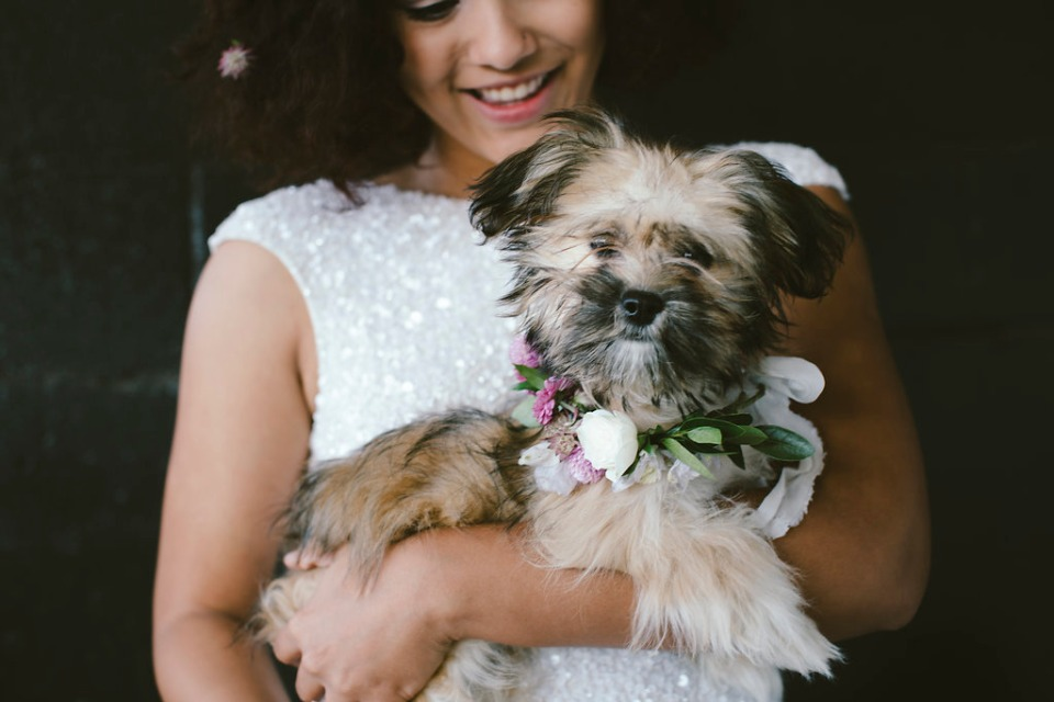 sweet little wedding puppy