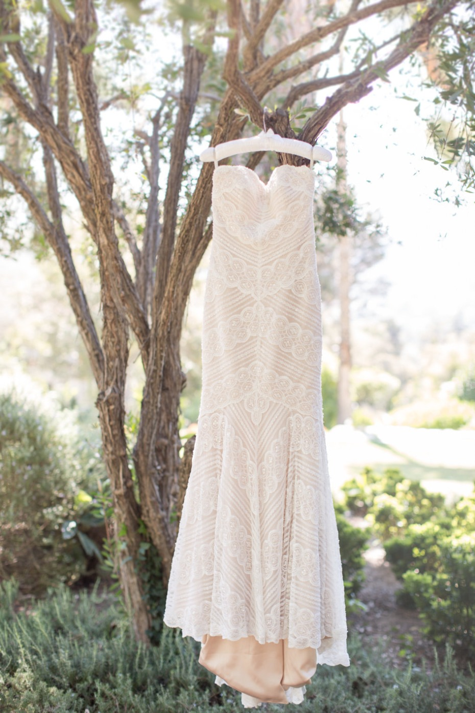 Gorgeous lace gown with blush underlay