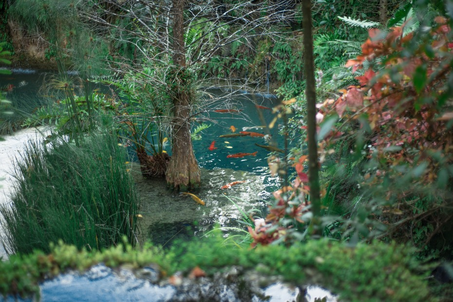 tropical coy pond at your wedding venue