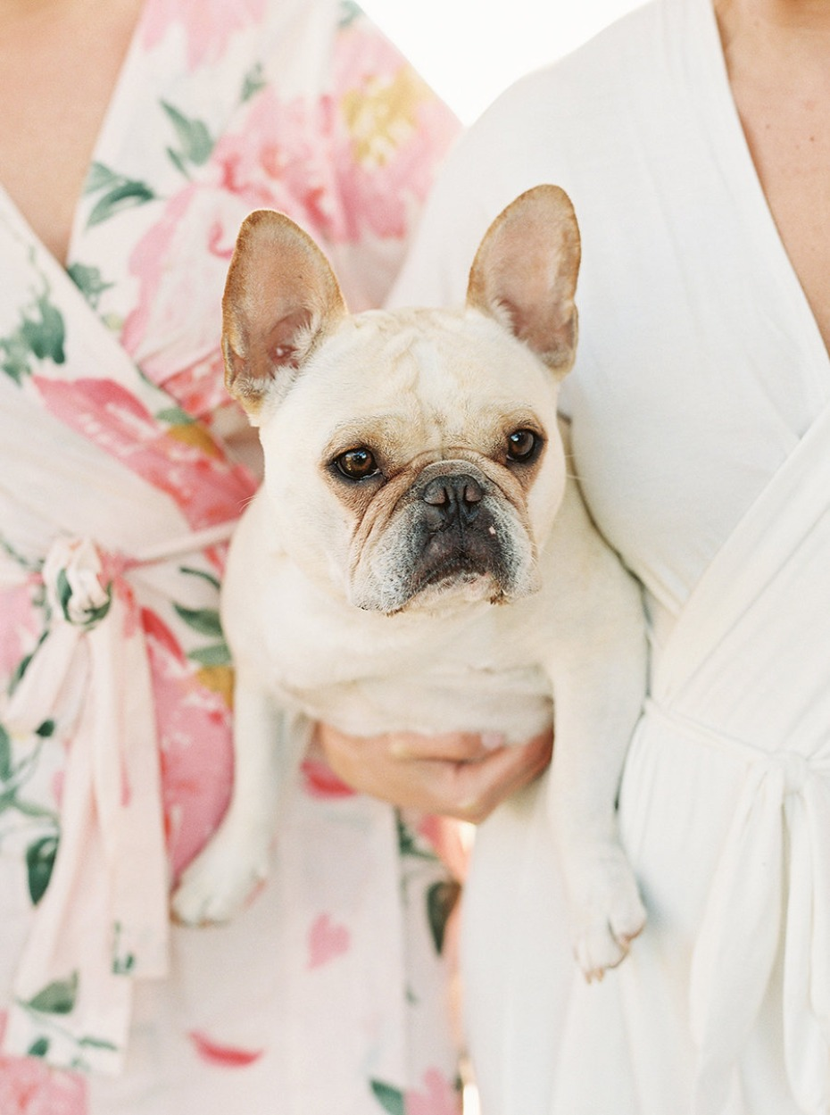 Ted the wedding pup