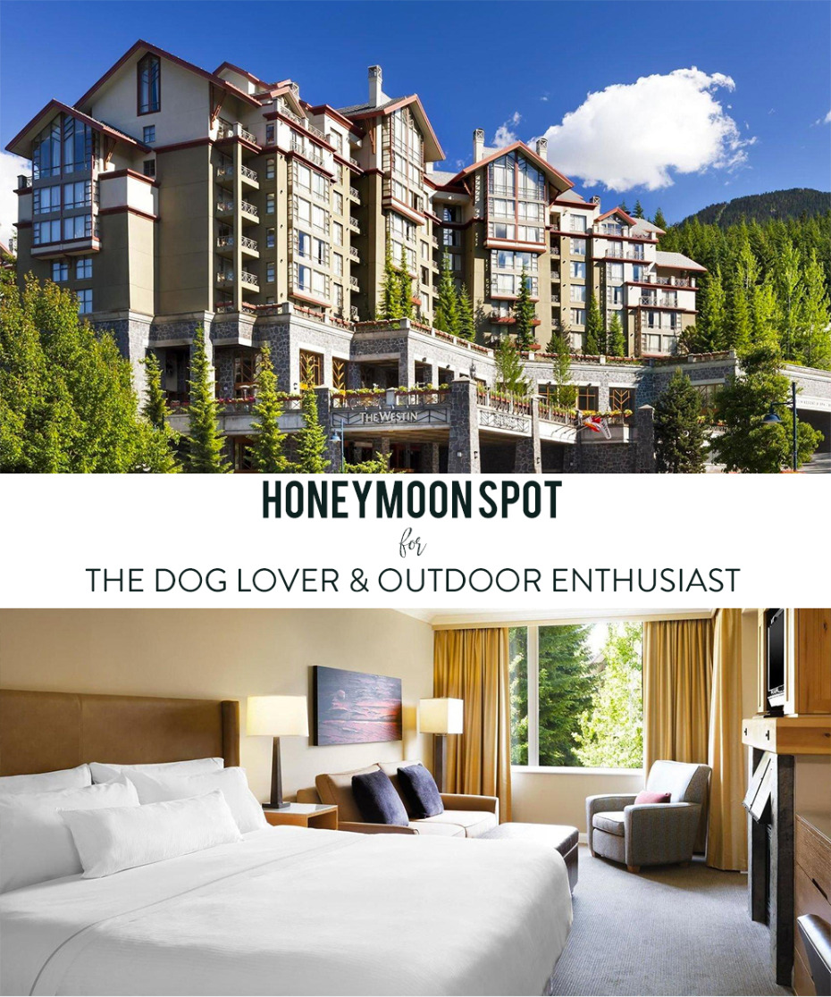 honeymoon destination that you can bring your dog to