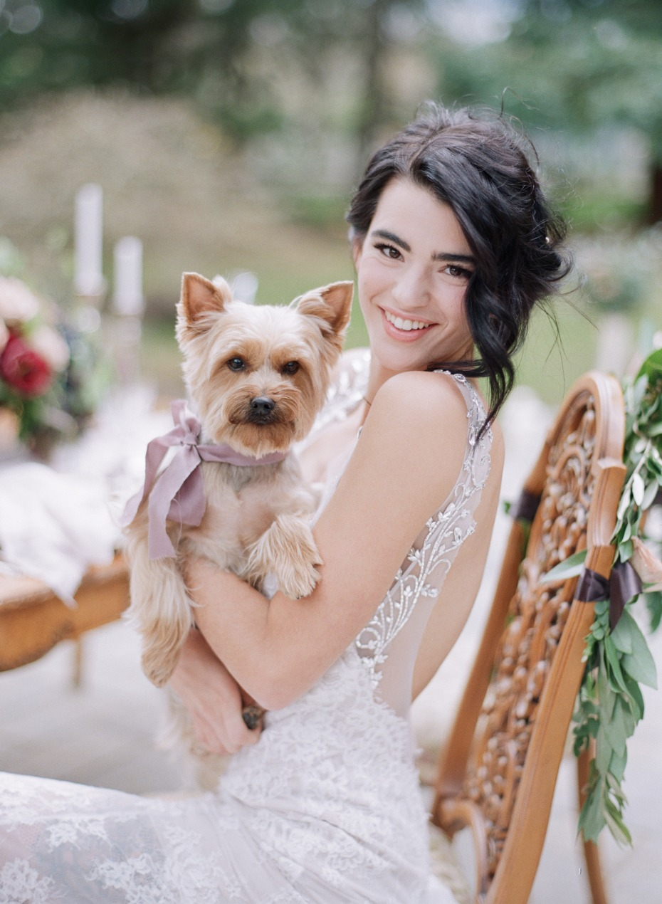 Wedding pup with a pretty bow