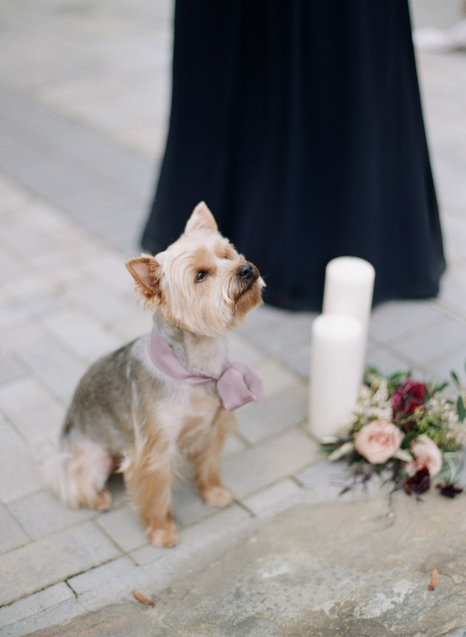 Cutest wedding pup