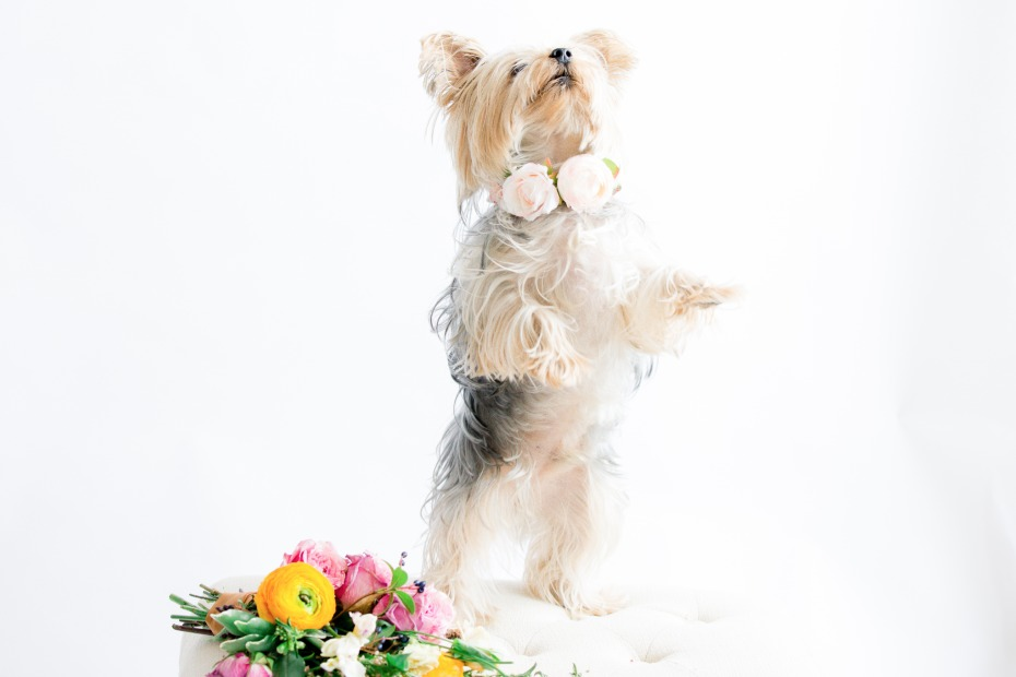 This flower pups for tricks