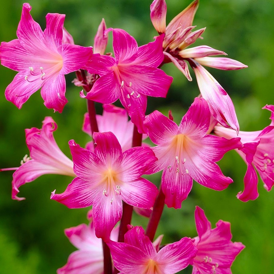 10 surprising poisonous flowers that you might want to know about