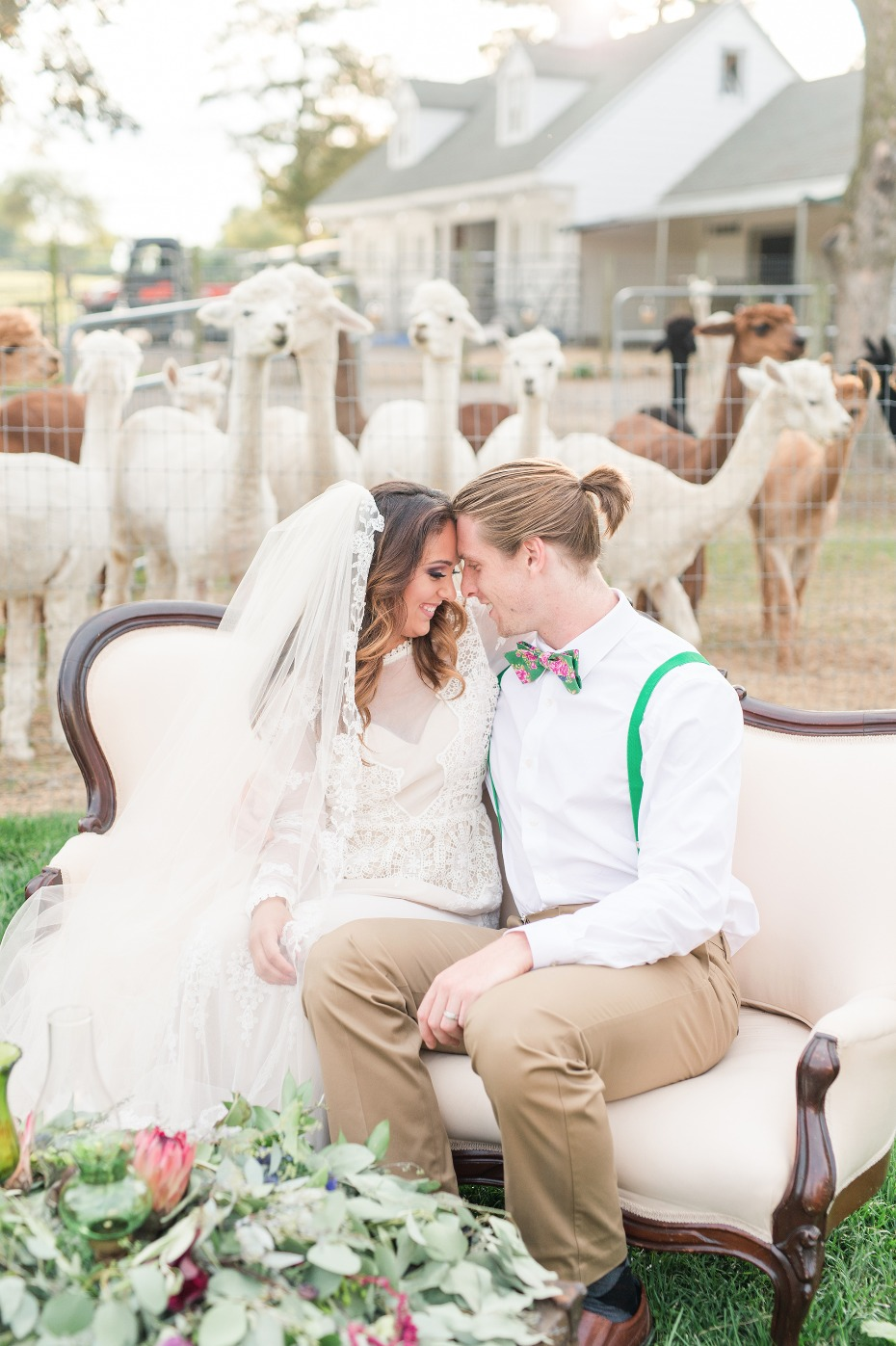 Get married on an Alpaca Farm