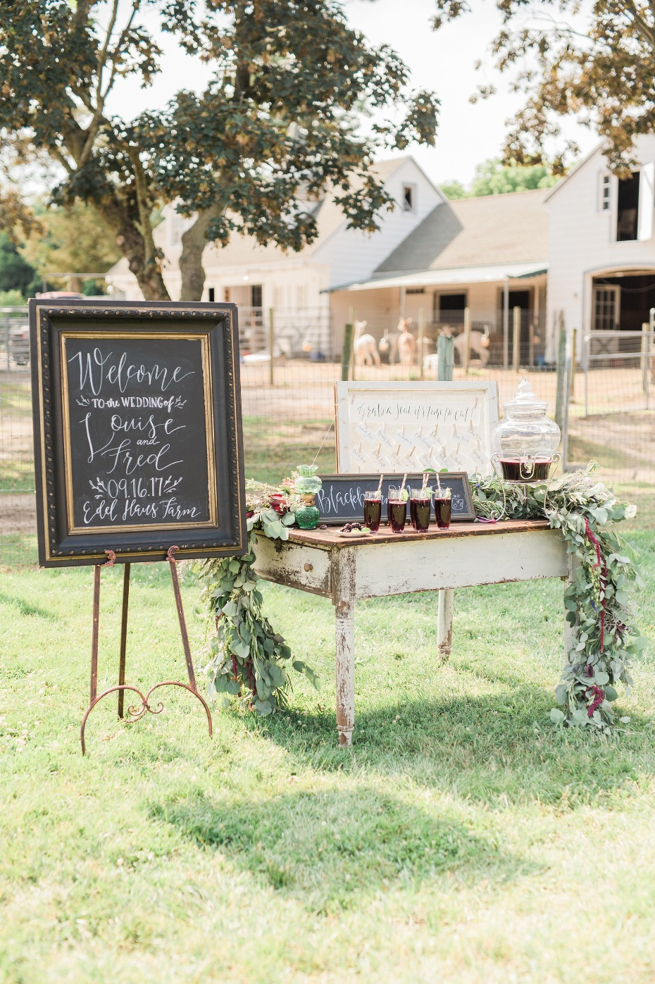 Rustic wedding on an Alpaca farm