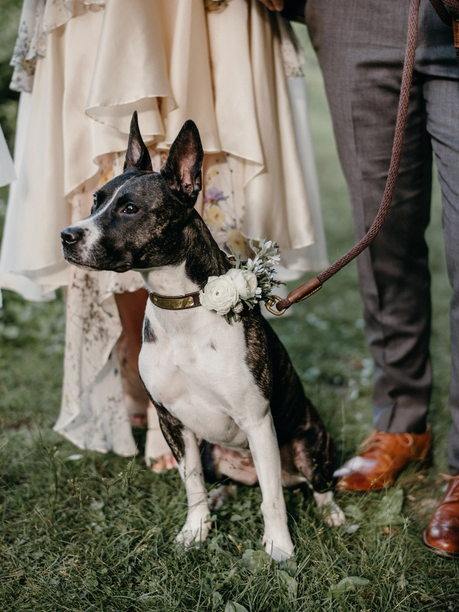 Wedding pup with flower collar