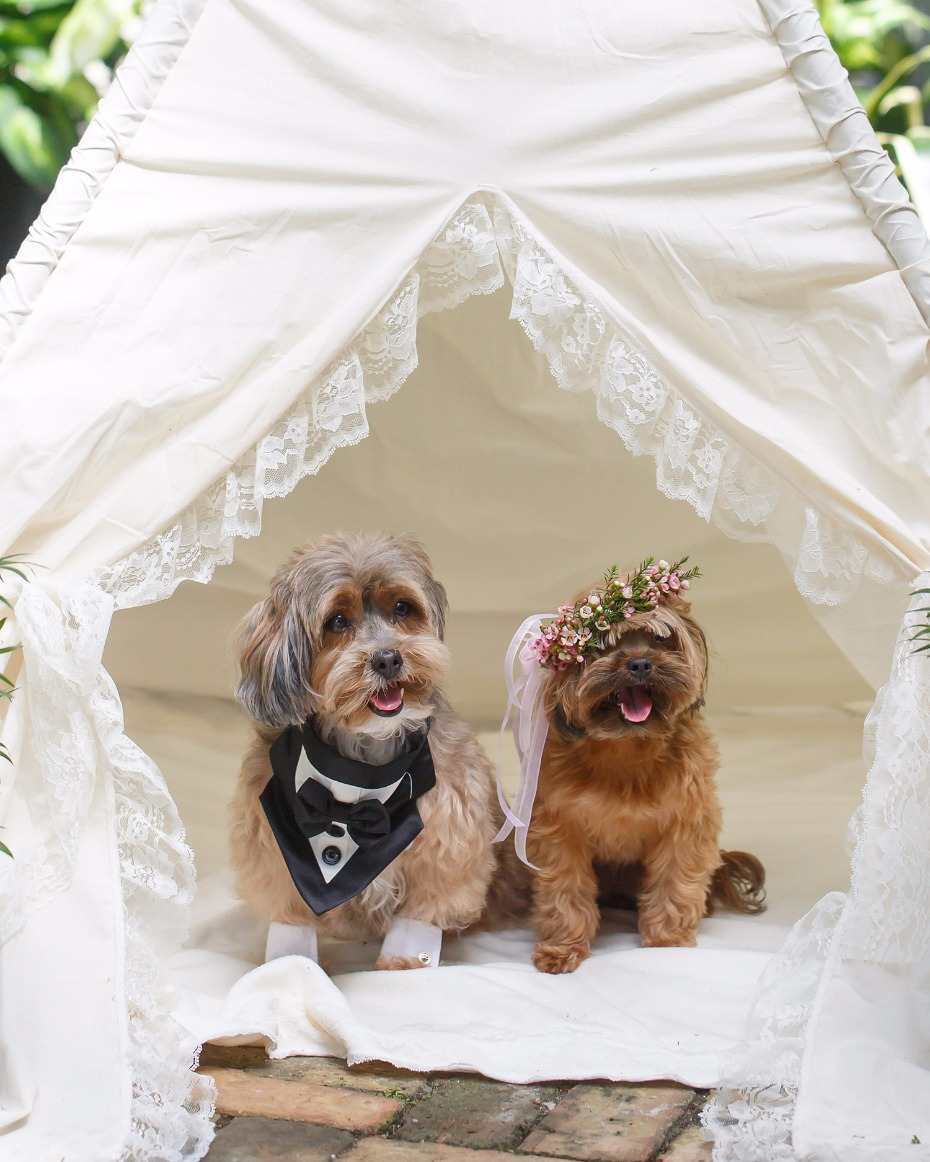 A Pair of Pooches Just Tied the Knot and Their Wedding is UNREAL