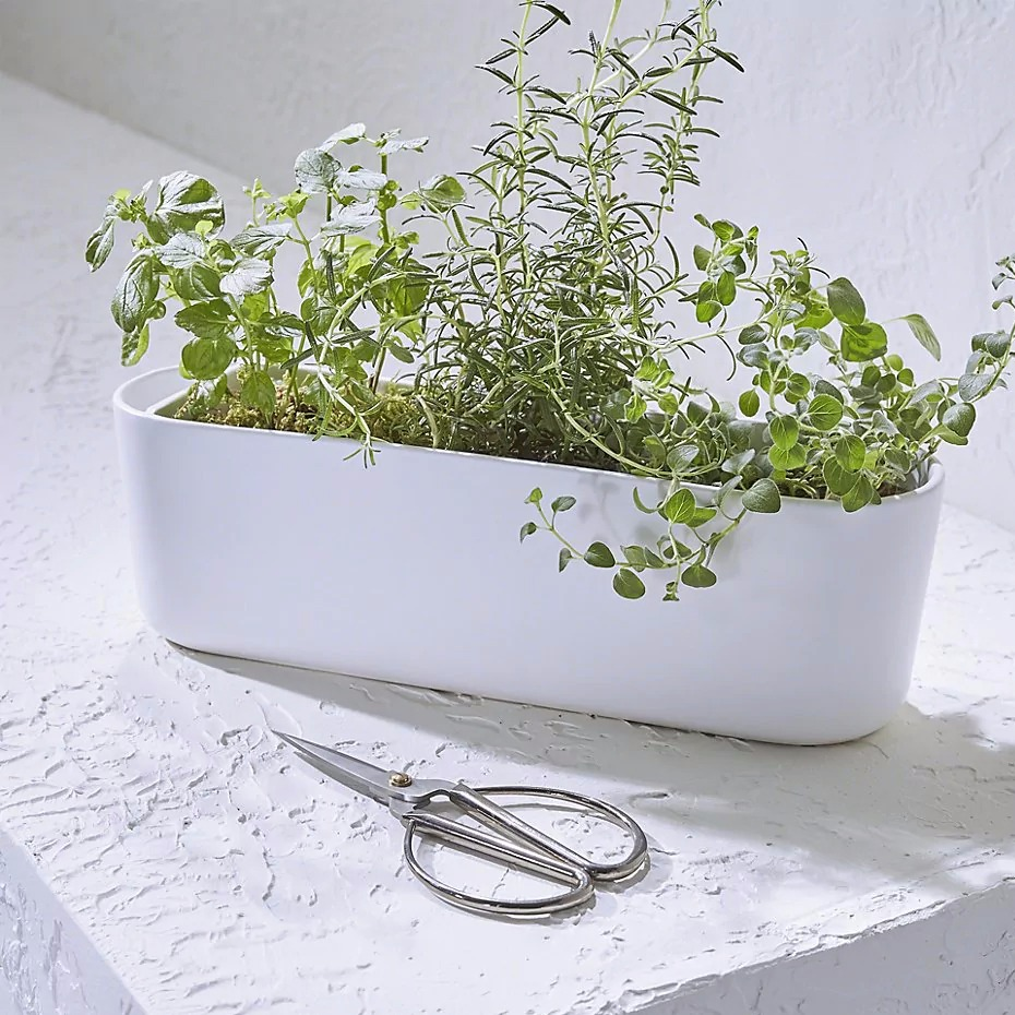 matte white ceramic white oval container for herbs