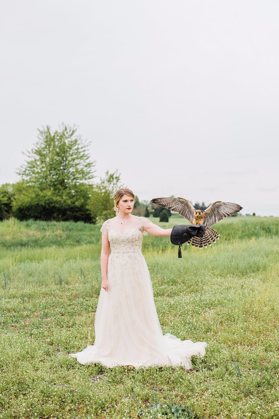 Falcon and the bride