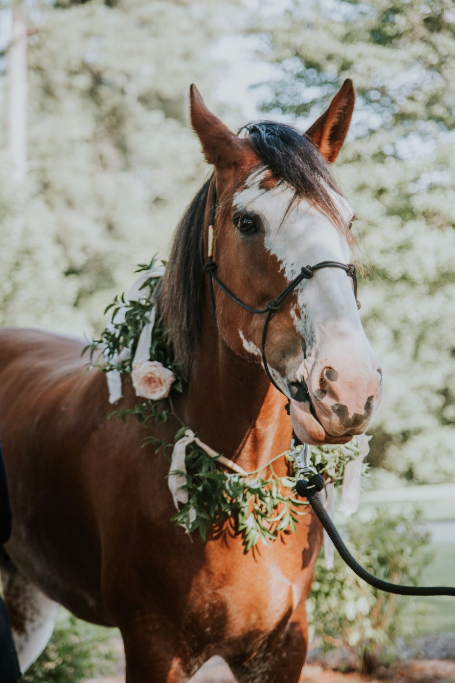 romantic flower halo for the wedding horse
