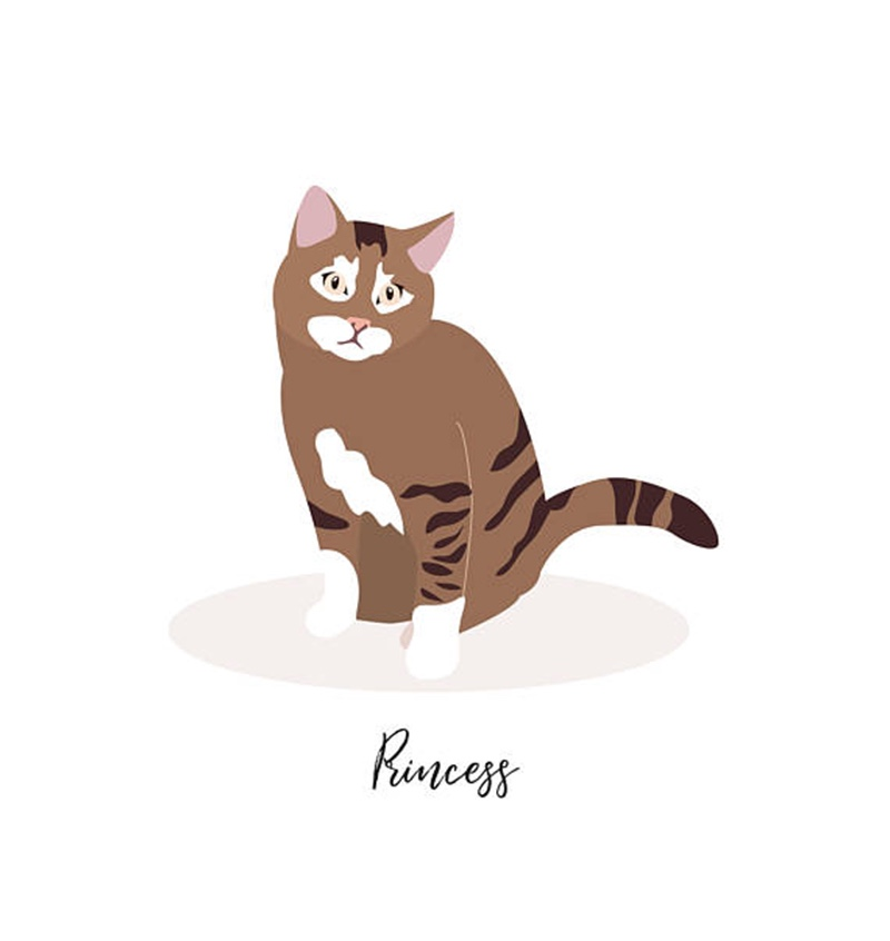 Miss Design Berry's custom pet portrait features an illustrated portrait of one pet, as well your pet's name. You can customize any