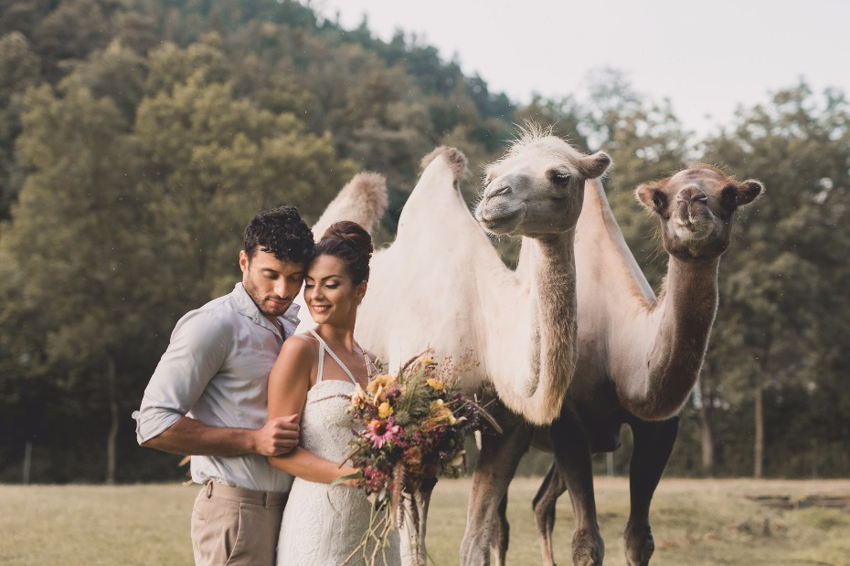 bride and groom and wedding camels