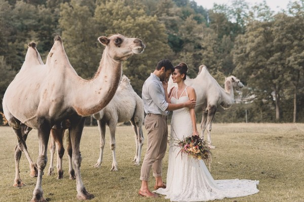 What Happens When You Invite A Herd Of Camels To Your Wedding