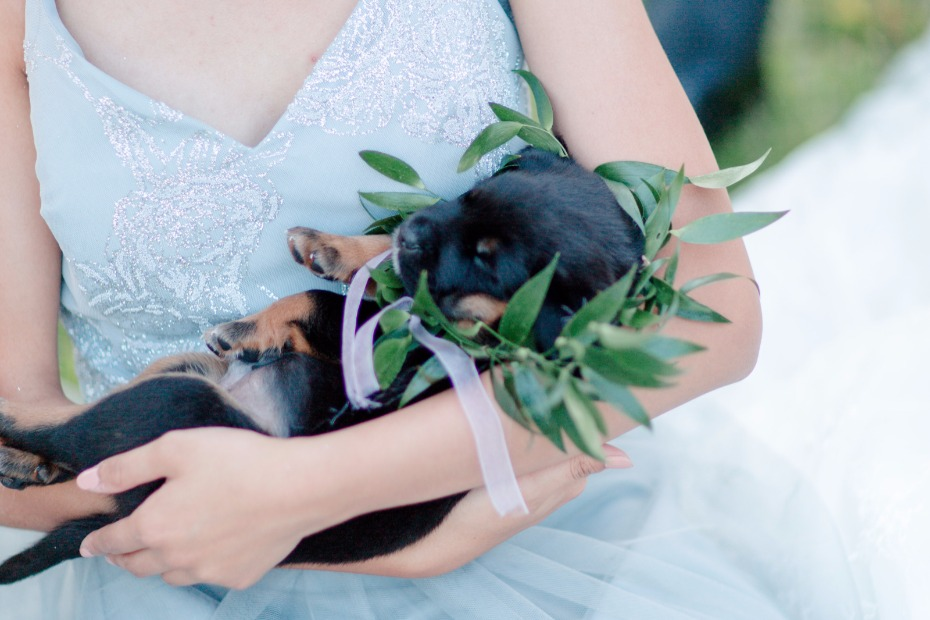 sleeping wedding puppy with a greenery collar halo