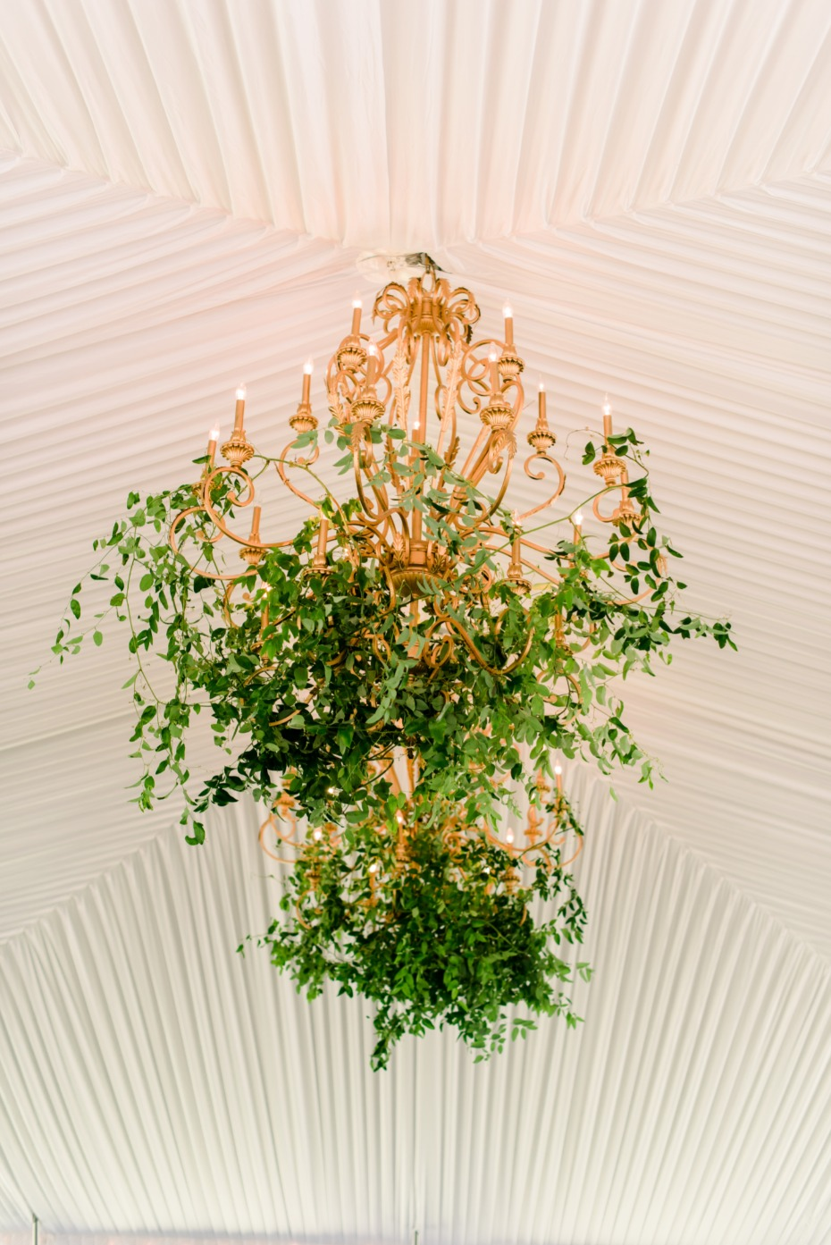 ivy accented wedding chandeliers in the center of the reception tent
