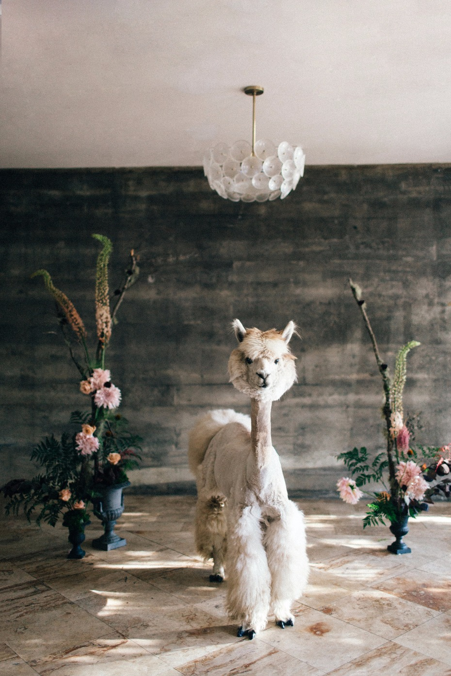 Llama tell you about this Alpaca wedding