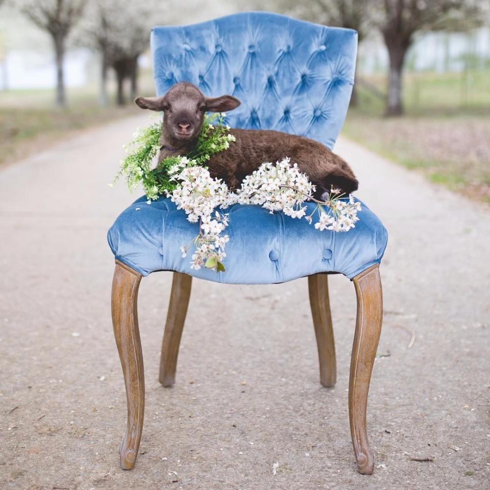 Profile Image from Weddings For You Boutique & Vintage Rentals