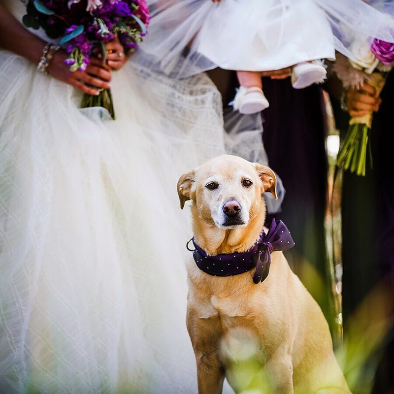 Today's tips for newly engaged couples: Ever thought about having your 4-legged friend be a part of your big day? Through the millennial