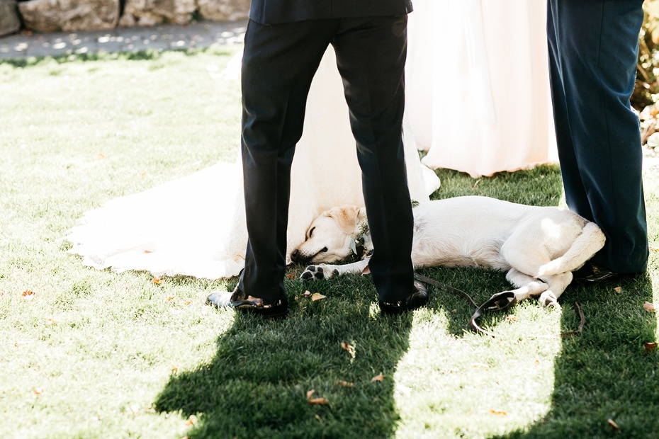 tuckered out wedding pup